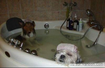 normal_spa-pour-chien