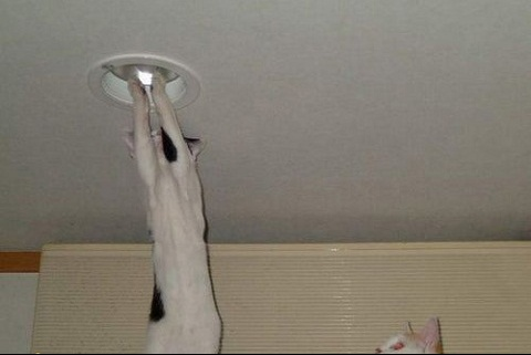 chat electricien