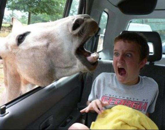 kid-loves-animals