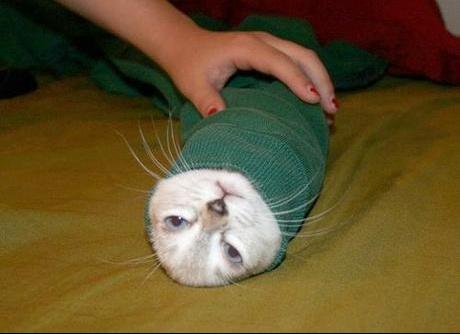 kitty-maki_642rzstlxzc4wookkows0co0s_6ylu316ao144c8c4woosog48w_th