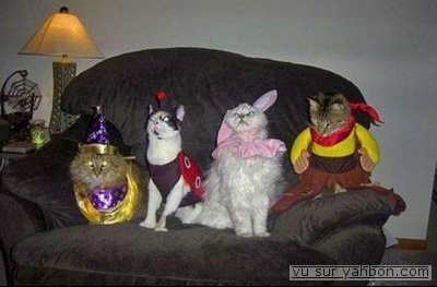 normal_carnaval-pour-chat