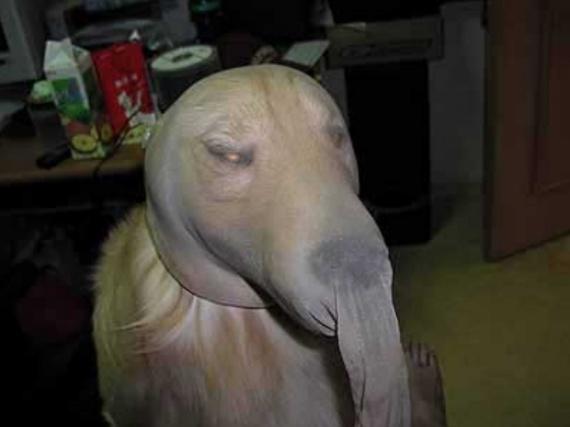 deguisement-animaux-22-chien-cambrioleur