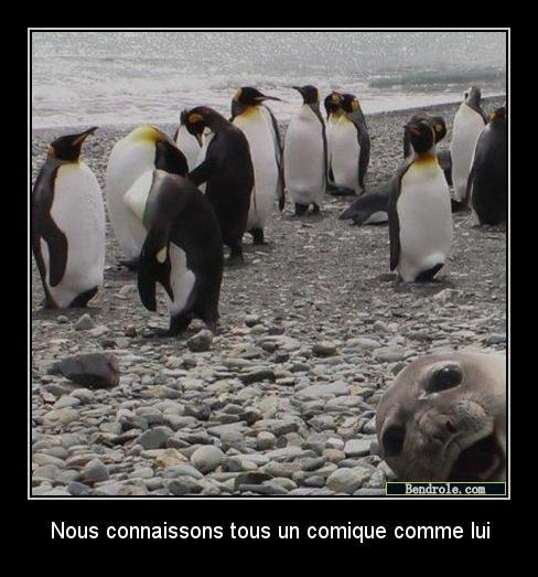 phoque-images-marrantes-1315337923