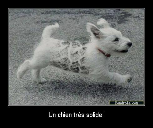 chien-auto-drole-1313331446
