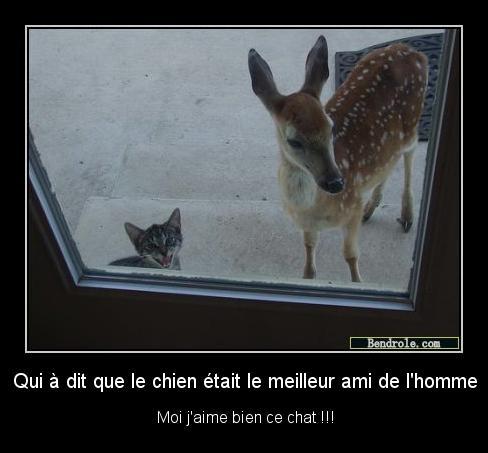 chat-drole-chevreuil-marrantes-1329587184
