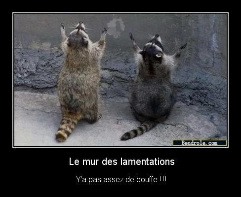 Animaux-droles-mur-lamentation-1313804449