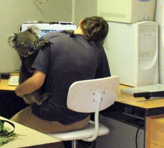 animal-au-travail