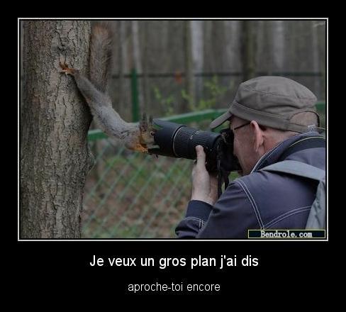 ecureuil-curieux-photo-1313359523