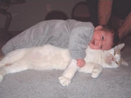 animaux44-vip-blog-com-546011chat_bebe