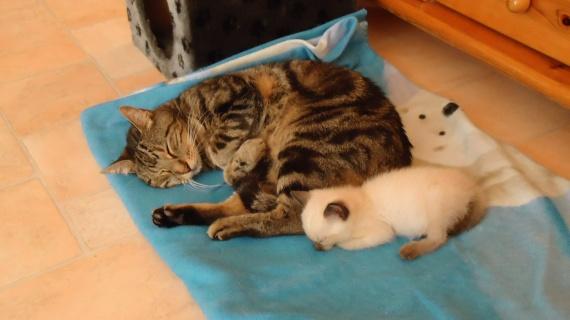 Zippo et Fuji bébé