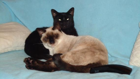 Fuji et son frère Yuki