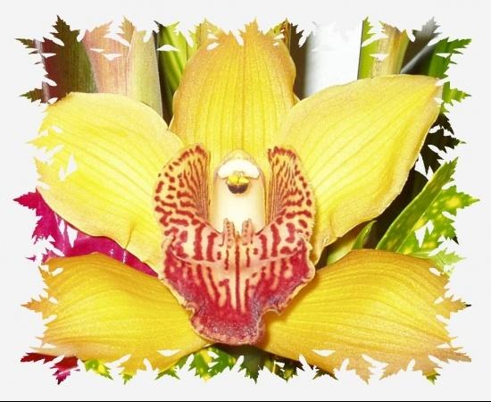 creations-numeriques-orchidees-autres-vos-creations-pont-saint-esprit-france-9591943622-927330