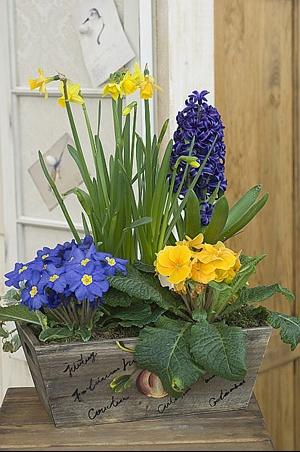 jardiniereprtps1