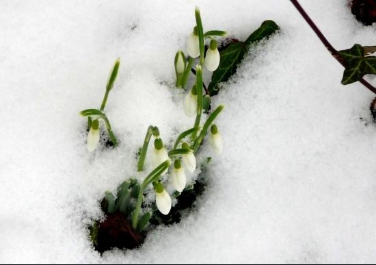 perce-neige-gravigny-france-1085949838-1282829