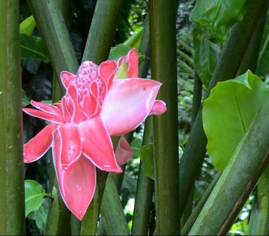 fleurs-exotiques-point-a-pitre-france-5407373310-861744