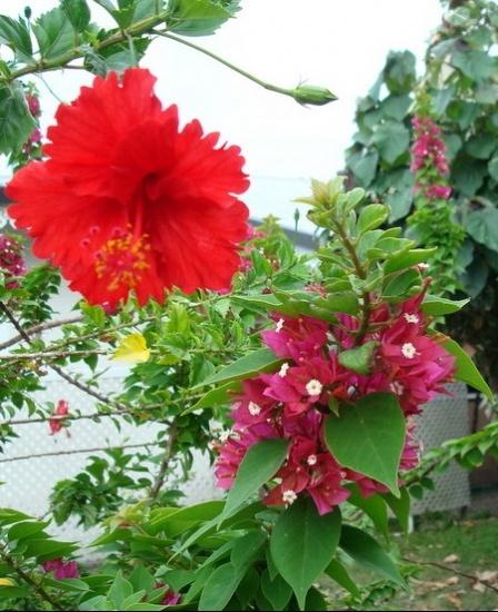 fleurs-exotiques-moorea-polynesie-francaise-1271754249-1239350