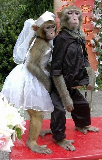 mariage-animaux-7155a7