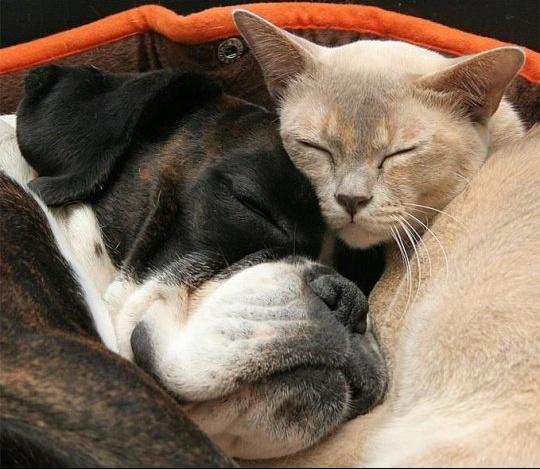 sieste chien chat dormir
