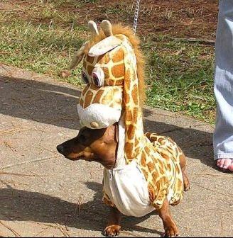 photo-humour-animaux-13