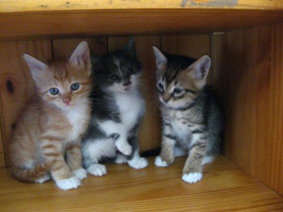 Billy, Tom et Scat