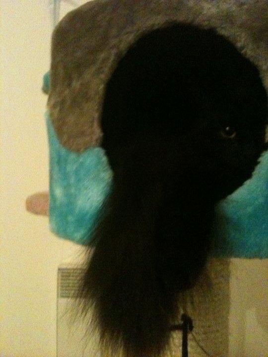 Minette arbre à chat