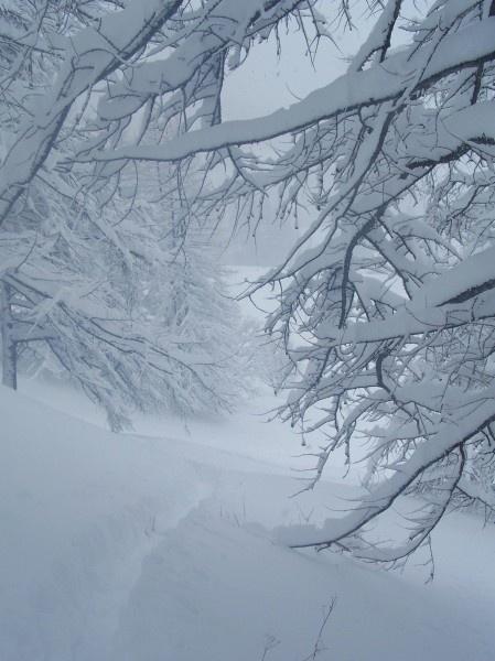 melezes-sous-la-neigeCN