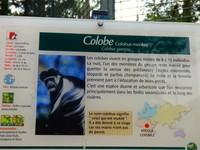 COLOBE