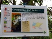 CERCOPITHEQUE DE L HOEST
