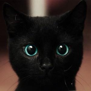 Image 1192: chat noir seeu sourire yeux_bleus