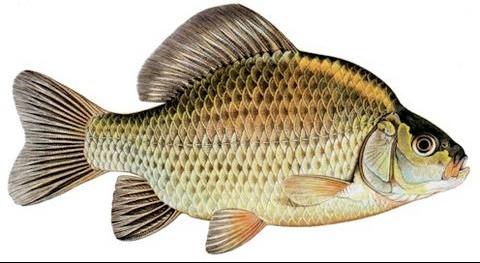 Le jeu la pêche pour les amis sur landroïde télécharger