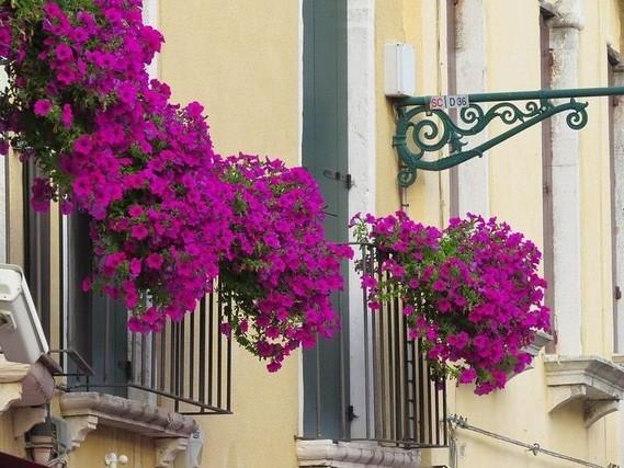 Fleurs Balcon Plein Soleil Petunias Pourpres 300 Idees