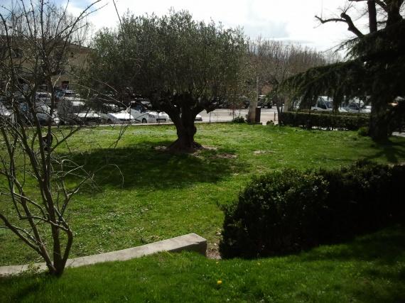 parc (cérémonie laïque)