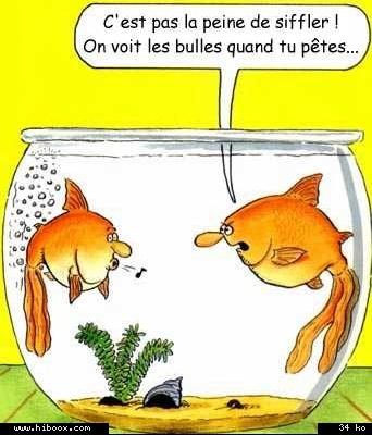 bocal a poisson1