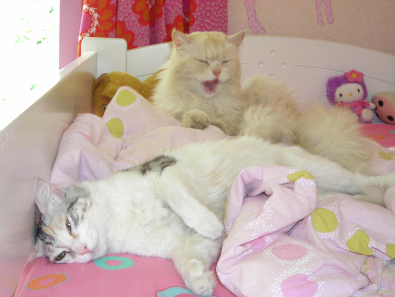 Mon Chat Dort Sur Mes Pieds interdire a un chat de monter sur le lit - chats - forum animaux