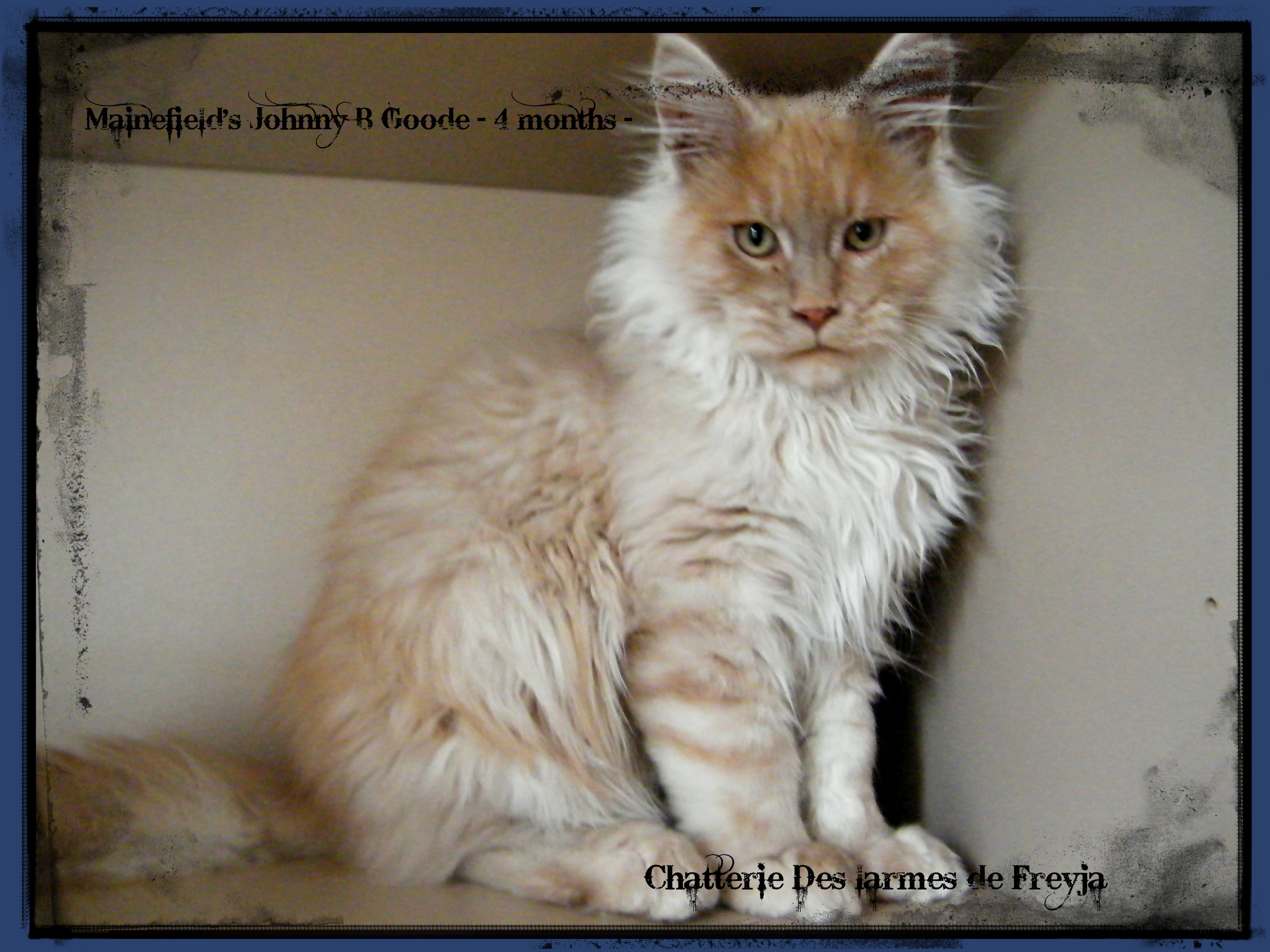 Poids maine coon male 6 mois – Popular breeds of cats