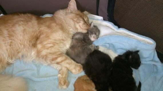 Shanks et les bébés
