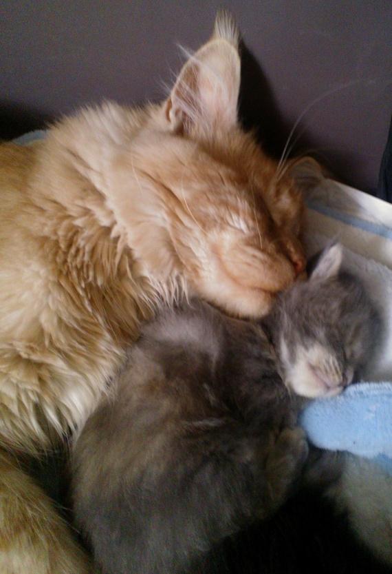 Shanks et Babydoll