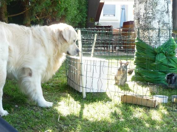Les lapins 2 Mai 2012 008