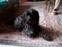 067 Lilou petite chienne récupérée à la SPA ( chez ma fille)