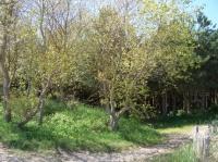 Sentier de forêt en bordure de plage