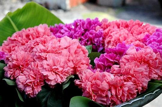 bouquets-fleurs-spirituels-297705