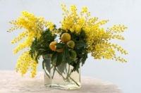 bouquet_mimosa_kumquat