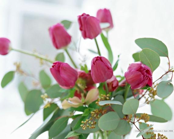 1201015086_1024x768_brilliant-flower