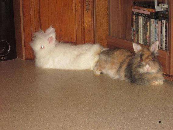 Igloo (le blanc) et Canelle la Princesse