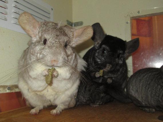 Chaussette & Blacky