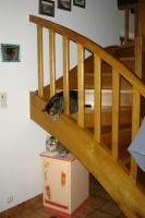 Frimousse dans l'escalier veut jouer avec son frère sur le meuble sous l'escalier