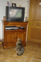 là c'était trop fort Mafalda surpris entrain de regarder une émission sur les chats !