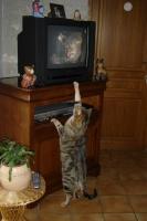 il etait à fond dans l'émission , ensuite il a même été voir derrière la télé ! on n'en revenait pas