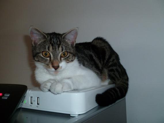 Abby sur la box