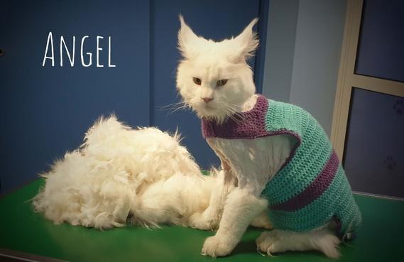 angel le moche moche